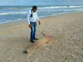 [Filhote de golfinho é encontrado morto em Camaçari]