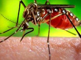 [Instituto Butantan obtém patente para produção de vacina contra dengue]