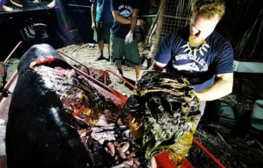 [Baleia é encontrada morta nas Filipinas com 40 kg de plástico no estômago]