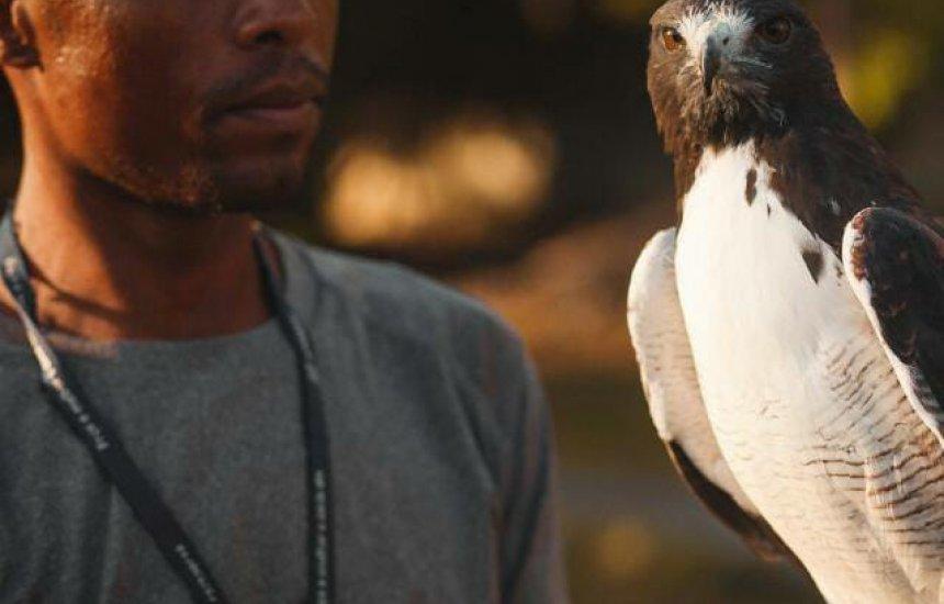 [Treinador de aves procura por águia desaparecida em Camaçari]