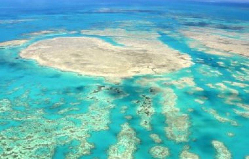 [Morte de corais em massa ameaça biodiversidade do Sul baiano]