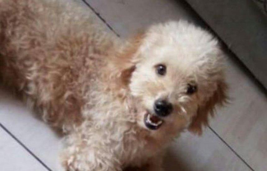 Procura-se cãozinho desaparecido em Camaçari