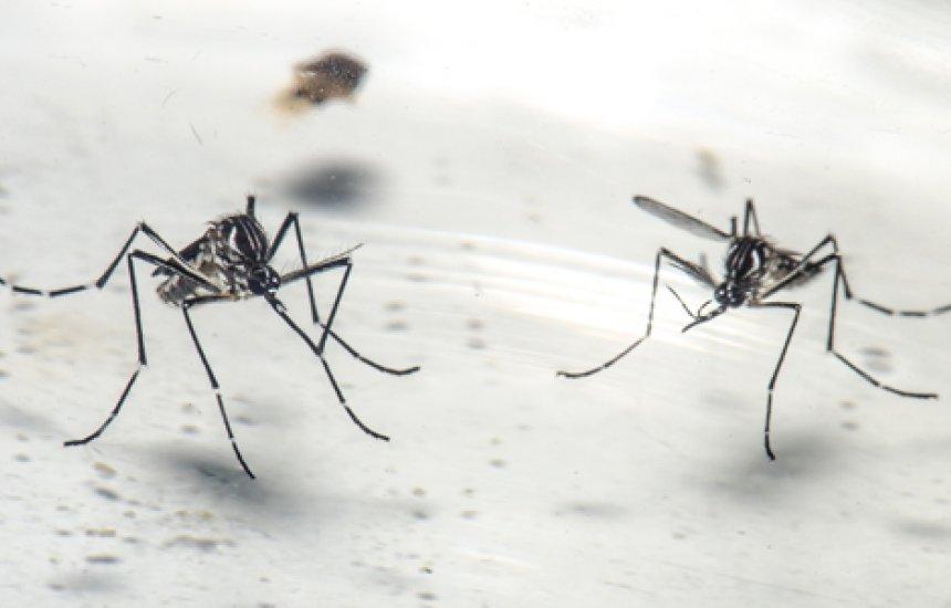 Bahia: Casos de chikungunya crescem 434% entre 2019 e 2020