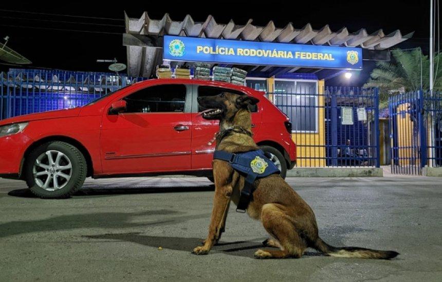 [Bahia: PRF apreende drogas e prende traficante com auxílio de cão farejador]