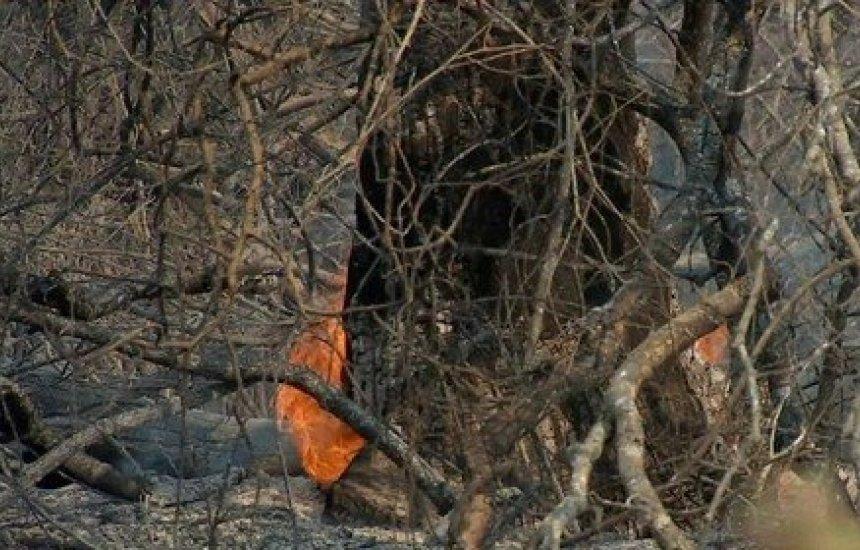 [Senadores aprovam convite para Salles prestar esclarecimentos sobre incêndios no Pantanal]