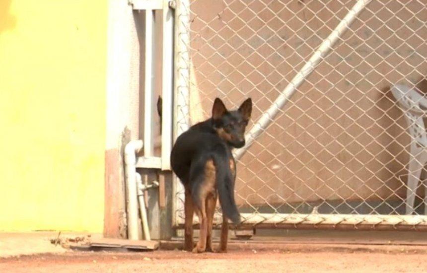 Mais de 20 cachorros são mortos por envenenamento em menos de 24h em vilarejo no oeste da Bahia