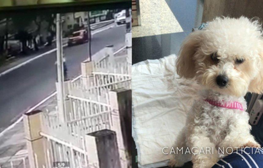 [Falso dono leva cachorrinha que tinha fugido de casa na Gleba C]