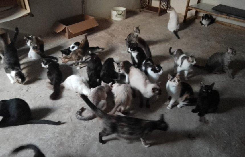 [Camaçari: Protetora de animais pede ajuda para custear despesas com gatos]